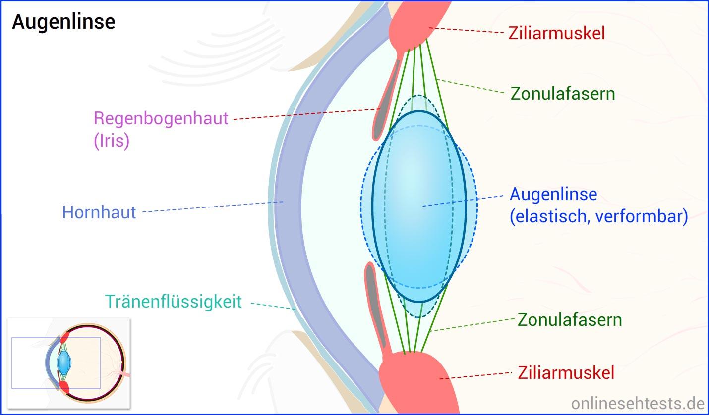 Fein Menschliche Anatomie Augen Galerie - Anatomie Ideen - finotti.info